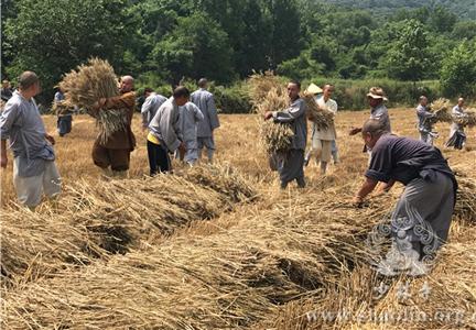 Καλοκαιρινός Θερισμός Στο Αγρόκτημα Τσαν